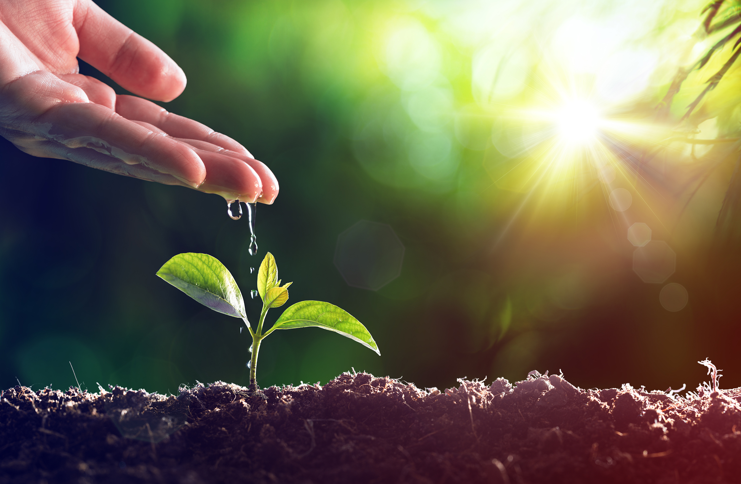 C84   El compromiso de las empresas para cambiar el rumbo del planeta